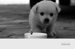 小狗喝了牛奶怎么补救(狗狗喝牛奶的好处)_1995人推荐