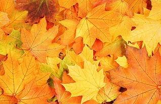 秋天落叶的心情说说_秋天落叶说说心情短语