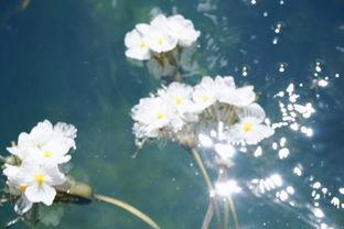 女儿说母亲水性养花