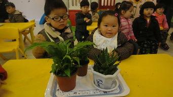 幼儿园宝贝植树节话语