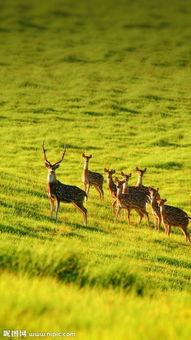 鹿 唯美 高清图片