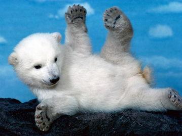 动物世界大猫育儿记4