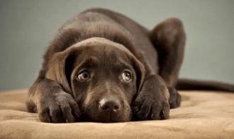 三、狗狗被主人惩罚