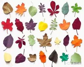 玩创意 这样的树叶画你见过吗