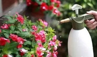 水中养花放置维生素