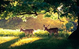 关于鹿的美图分享