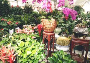 养花像种庄稼