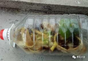 养花肥料撒多了怎么办
