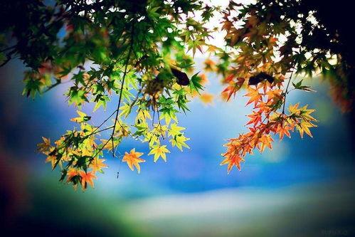 描写秋天的句子六级