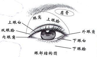 眼睛下耷怎么化妆
