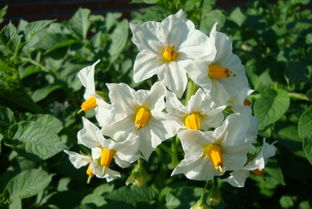 把人生,活得更漂亮-----咖喱土豆花