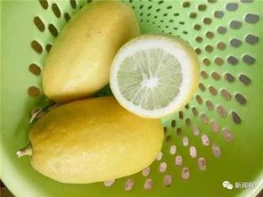 几百斤 香水柠檬 被订购一空