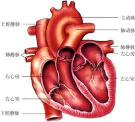 人的心脏一般位于 A.盆腔中央B.胸腔中央偏左下方C.腹腔中央D.胸腔中央偏右下方 题目和参考答案 精英家教网