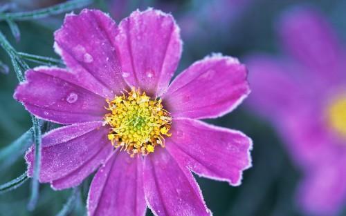 冬季养花草之美