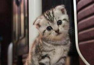 引起皇家宠物蓝猫毛囊炎的原因