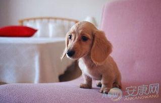 小狗起什么名字好听