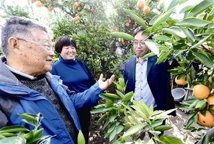 赵亚夫到江心洲指导柑橘冬季防寒工作