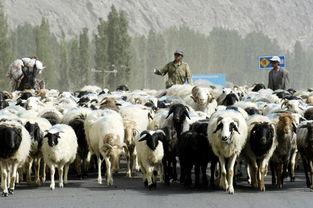 牧场之国描写牲畜的句子有哪些