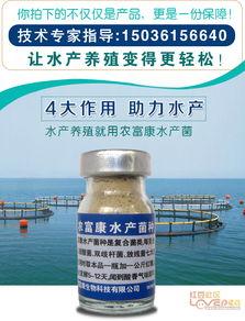 虾塘乳酸菌的注意事项