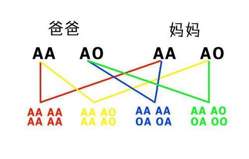 型 o 型 ab o型血和ab型血生的孩子是什么血型
