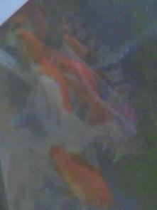 金鱼几天喂一次(金鱼要几天喂一次食?)