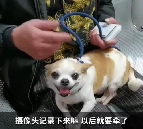 遛狗不牵绳,被抓不承认,没想到电子警察给了证据