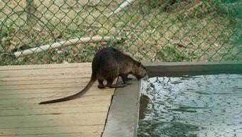 官宣安庆野生动物园开园时间定了附内景