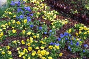 松树皮养花经验