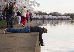 全球多地迎来绚烂樱花季 美景如画 六