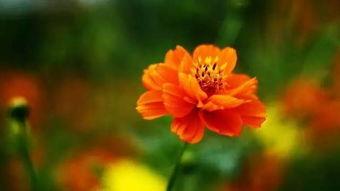 养花的哲理耐心等待