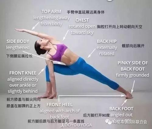 瑜伽头的正位图
