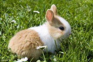 属猪和属兔的合财吗(属猪的和属兔的在一起澎财吗)