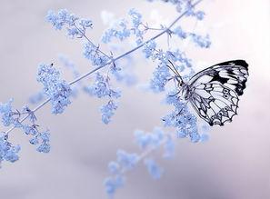 蝴蝶翩翩来古诗词