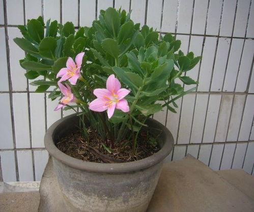 室内水养花怎么施肥