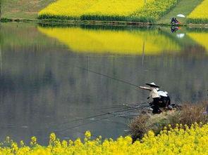 春天刮北风可以钓鱼吗