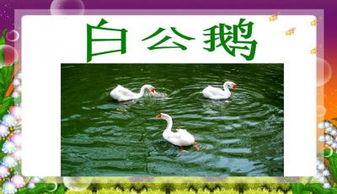 白公鵝中描寫白公鵝神態的詞語