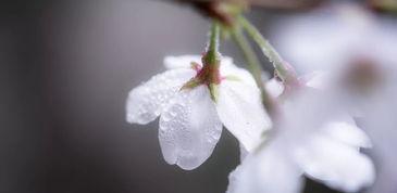 在海大,雾里看花原来是这样一种体验