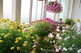 窗台能不能养花