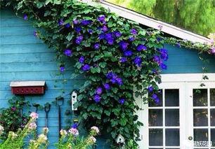 某人在自家阳台养花行为属于