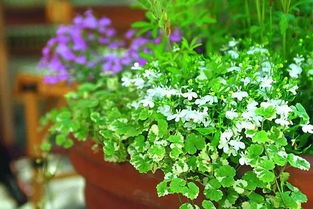 什么温度适合养花