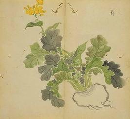 青青子衿,悠悠我心 诗经中的植物 上