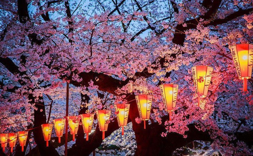 国家地理精选美图 不出国就能看完日本最美樱花