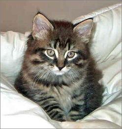 猫洗澡注意事项