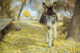 六天二千公里,带着小小马环游苍天圣地,感受荒漠与奇迹