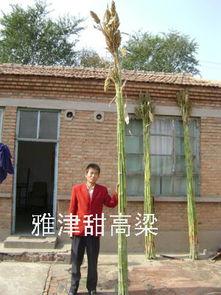 北京桑粱技术发展中心再生能源办公室