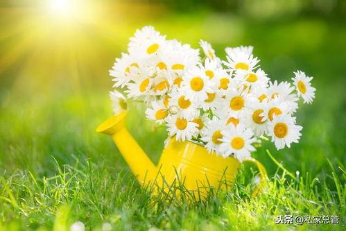 春天的诗句和名句_关于春天的好句和诗句