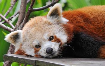 小熊猫家园45元(四明家园有没有80万左右的房子)