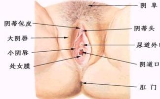 阴道出血都有哪些原因