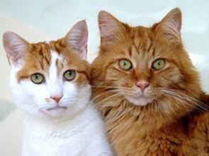 不俗的宠物猫猫英文名字推荐