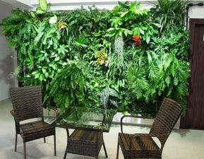 室内绿植摆放风水禁忌有哪些(室内植物摆放风水有什么禁忌吗)